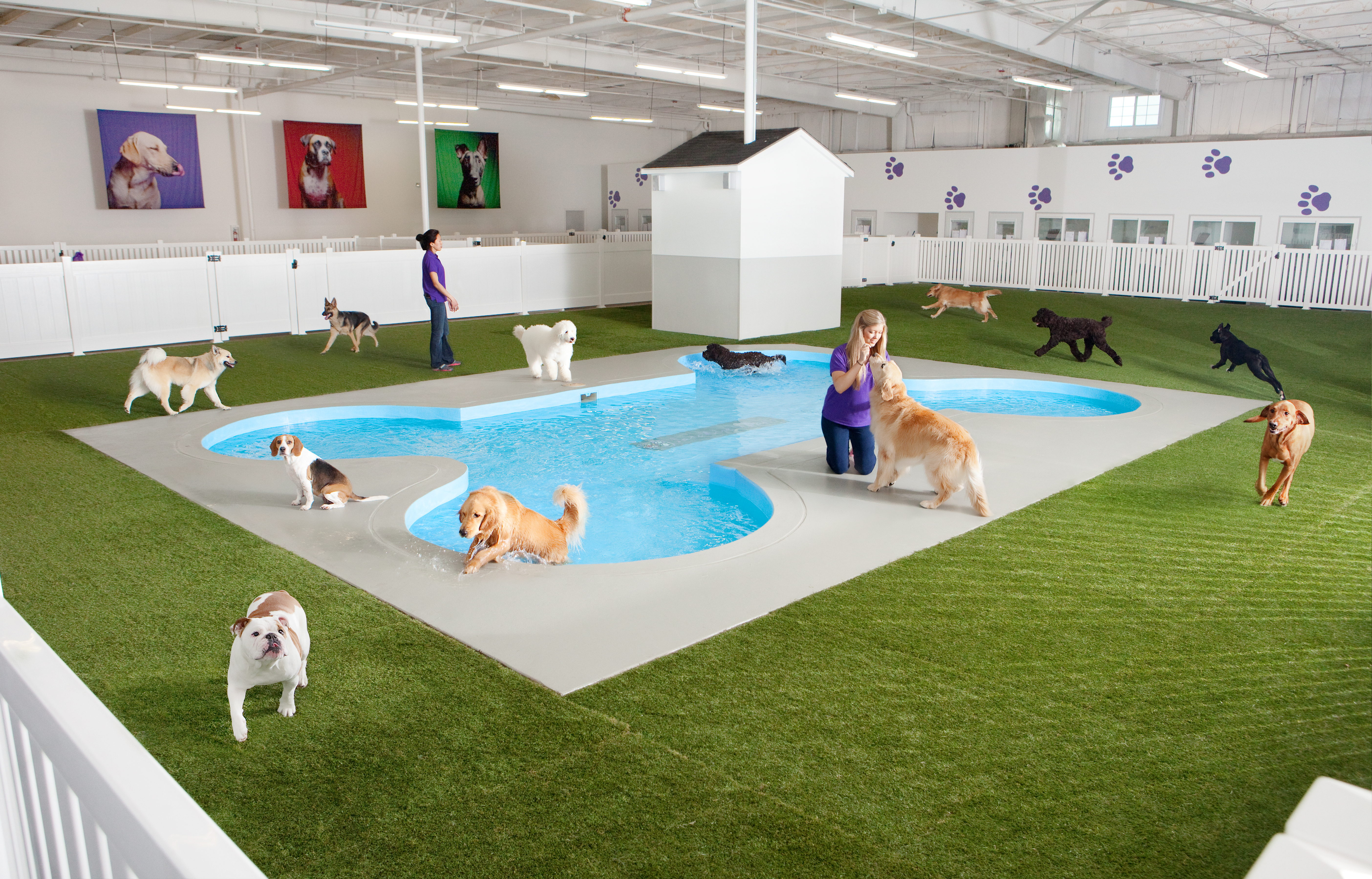 Paradise 4 Paws reviews | 3010 N Airfield Dr - DFW Airport TX