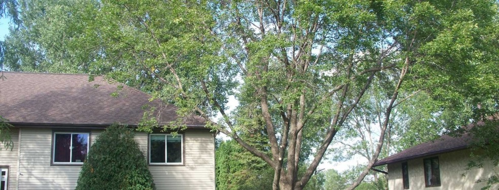 Arbortech Stump and Removal reviews | 6332 Rhode Island Avenue North - Minneapolis MN