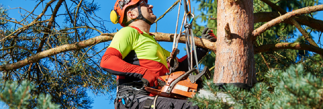Elite Tree Service AZ reviews | 17609 N 52nd Ln - Glendale AZ
