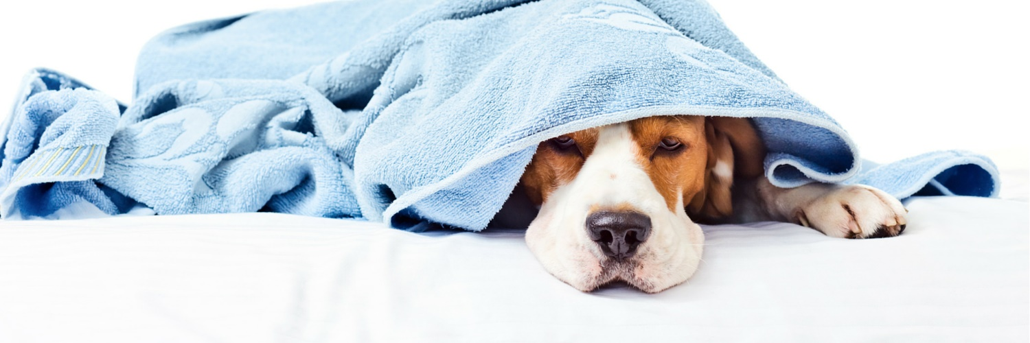 Under The Weather Pet reviews | 397 Patchen Road - South Burlington VT